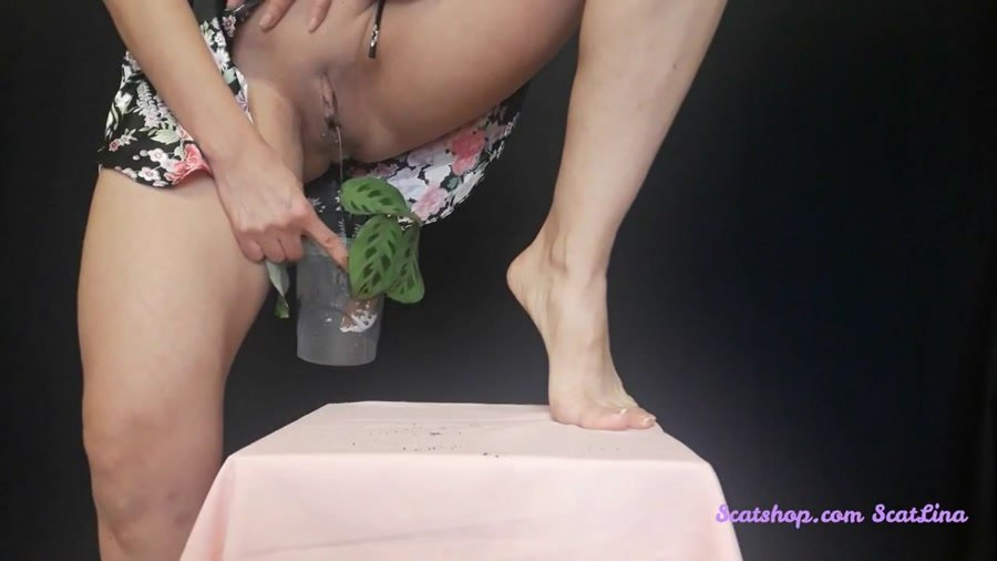 New scat: (Big pile, New scat, Scatting Girl, Shitting Ass) - I plant a flower and fertilize it [FullHD 1080p] - Shit, Piss, Solo